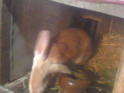 Taha Elzayda * مزارع الخير للأرانب
