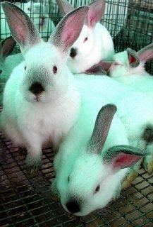 يوجد ارانب سلالات جميع الانواع