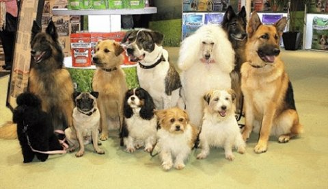 كلاب متنوعه للبيع