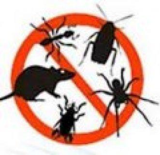 شركه مكافحه حشرات بينبع 0532829528مجموعه استرا