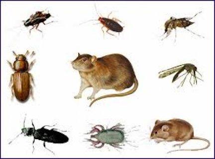 شركة مكافحة حشرات بالرياض 05566910410