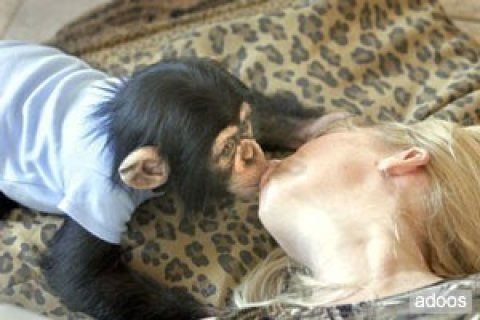 صور Cute And Lovely Baby CHIMPANZEE For Adoption 1