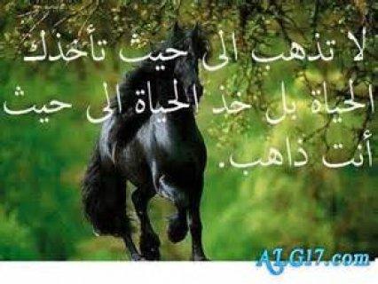 انا راجل متزوج38سنة مسلم رياضى اريد التعارف او الزواج01276999131