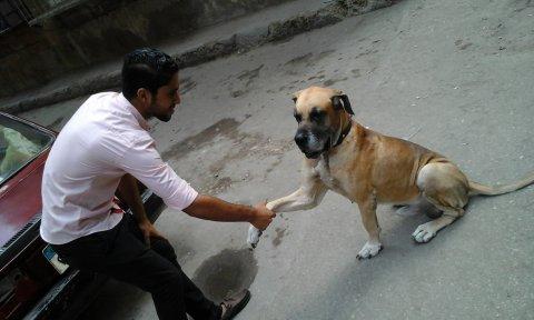 كلب دنواه للبيع
