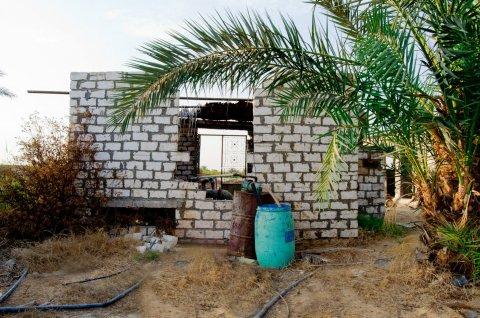 فرصه مزرعه كمثري مثمره بطريق مصر اسكندريه الصحراوي الكيلو 86