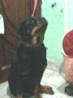 كلبه رود فايلر