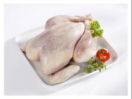 توريد اى كمية دجاج مذبوح مجمد ومبرد والفيلية وجميع مصنفاته