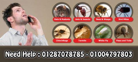 شركة سوافكو لمكافحة الحشرات والنمل والفئران و الصراصير