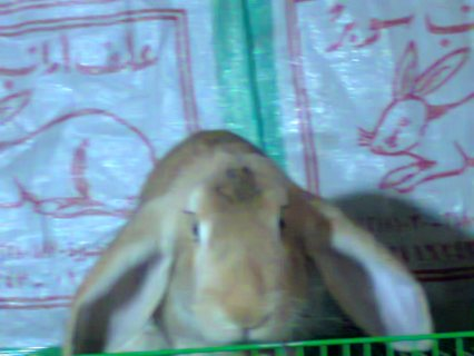 # ميت غزال# الغربية