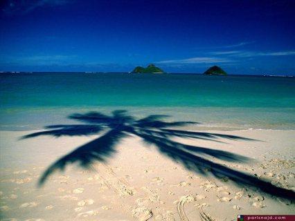 امتلك شاليهك على البحر على  طول بالسخنة واستمتع مع اسرتك