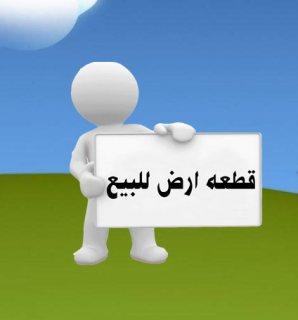 طريق بورسعيد