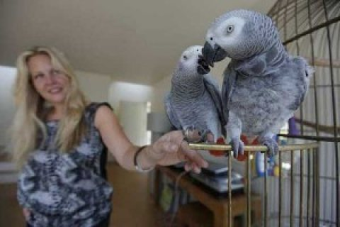 African Grey Parrots for sale/../././