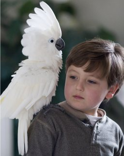 Home raised Cockatoo birds available.