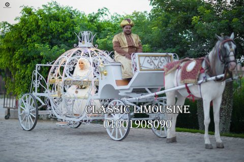 عربية زفة بس بحصان