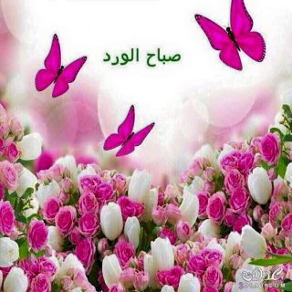 مساج بريفت مصر 01020919631