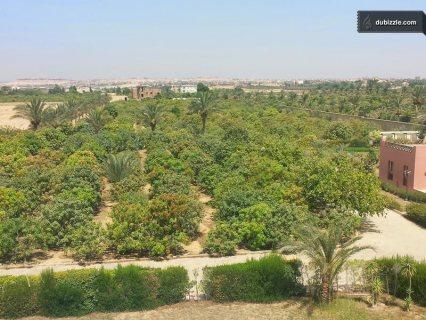 ارخص ارض للبيع بجمعية احمد عرابي