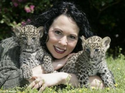 well tamped tiger,cougar,lion,cheetah,jaguar cubs for sale