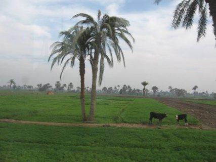 مزرعة للبيع على الطريق الصحراوى