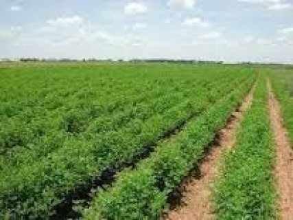 مزرعه للبيع 100فدان تبعد عن الهرم ب45كم كامله المر