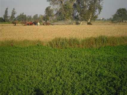 مزرعه 70فدان تبعد عن الهرم ب45كم كامله المرافق