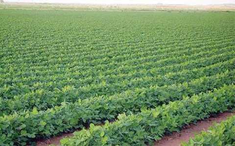 ارض زراعيه 130 فدان + حيازه زراعيه خالصه الاوراق قابله للتجزئه