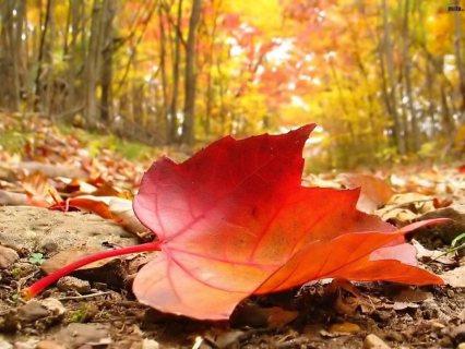 مساج فى ليالى الخريف و حمام مغربى بالصابون و الليف 01203382501