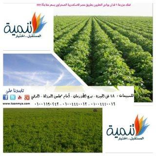 مزارع بوادي النطرون كاملة المرافق للبيع وجاهزة للزراعة