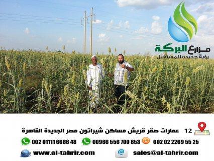 أفضل الفرص الاستثمارية فى السودان تبدأ من 95دولار