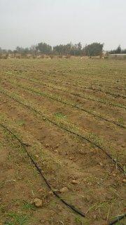 هام عاجل أرض زراعية للبيع  فرصة 10فدان