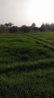 مزرعة 50 فدان قابلة للتجزئة تربه طينيه مسجلة شهر عقاري