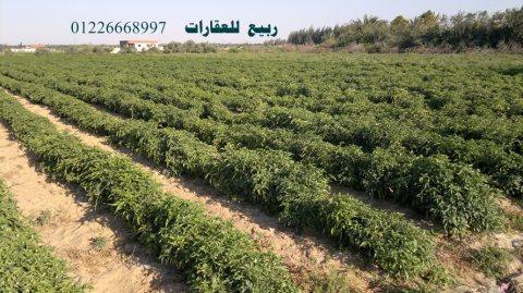 اراضى زراعية للبيع الاسماعيلية  مزارع للبيع بالاسماعيلية  عقارات الاسماعيلية