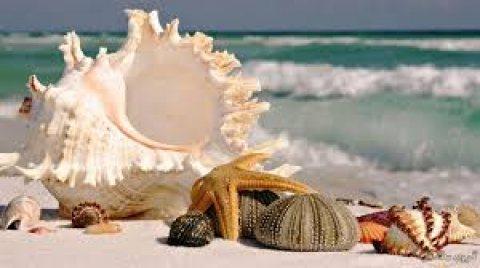 la mora beach امتلك في الساحل الشمالي في افخر القري علي البحر بالتقسيط