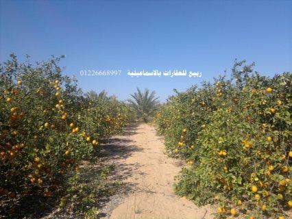 اراضى زراعية للبيع الاسماعيلية  برتقال مزارع للبيع بالاسماعيلية