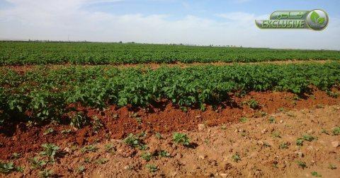 ارض زراعيه جاهزة للزراعه جميع المحاصيل