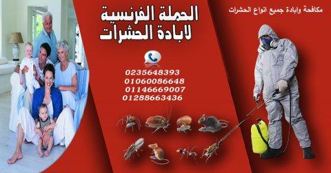 افضل شركات ابادة الحشرات فى مصر