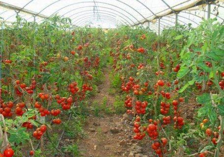 المستقبل في مزارع طيبة وبس