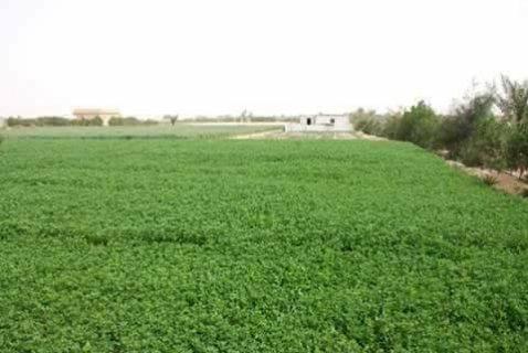 مزرعة 5 فدان في الكيلو 68 للبيع من المالك