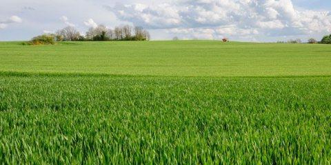 فرصة كبرى للاستثمار الزراعى