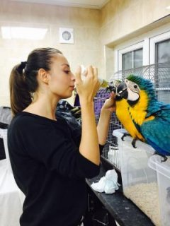 Macaw Parrots ready for new homes