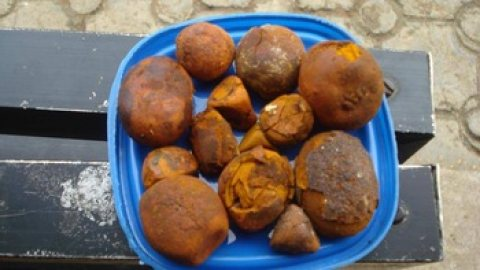 Ox Cow Gallstones For Sale | Cattle Gallstones Supplier