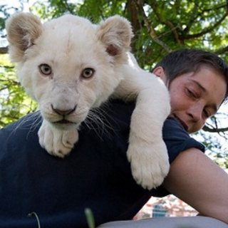 white lion available for Sale.