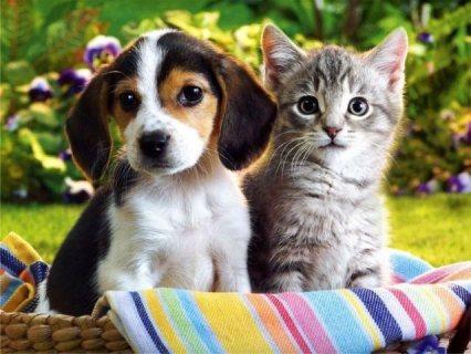 أستضافة داندي أوسكار للحيوانات الاليفة