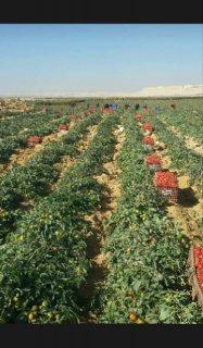 اراضى زراعيه مميزه جدا للبيع بالتقسيط