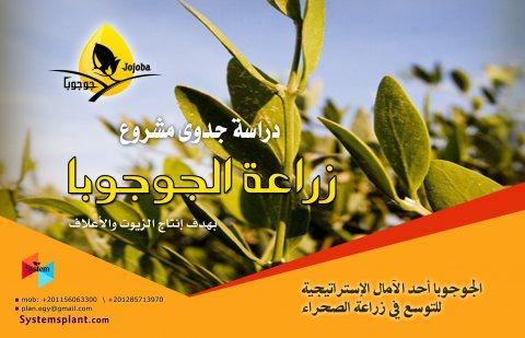 للبيع : دراسة جدوي  زراعة الجوجوبا بهدف انتاج الزيوت و الأعلاف