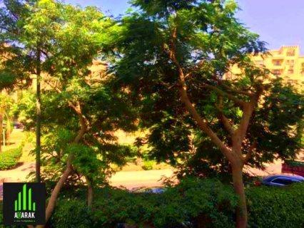 شقة مساحة ٢٣٤ متر حي الاشجار ، رسيبشن