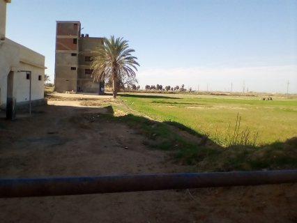 مزرعة دواجن مرخصة ومنزل خاص وسكن عمال وعنبر مواشي