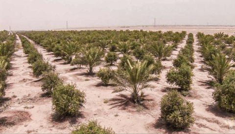 للبيع 5 فدان دابل فيس وادي النيل 6 أكتوبر