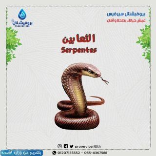 مكافحة-الثعابين مع بروفيشنال سيرفس /01068598882/